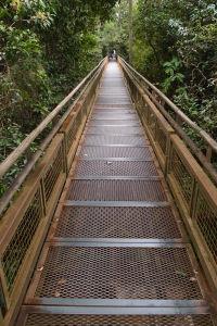 Mostík v džungli pri vodopádoch