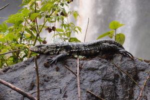 Iguazú - les je plný zvieratok