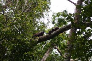 Opičky v Iguazú