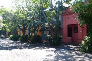 Stromy a farebné budovy na Plaza Mayor
