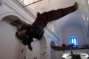 Výstava vtákov v bazilike