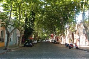 V uliciach Colonie nechýbajú stromové aleje