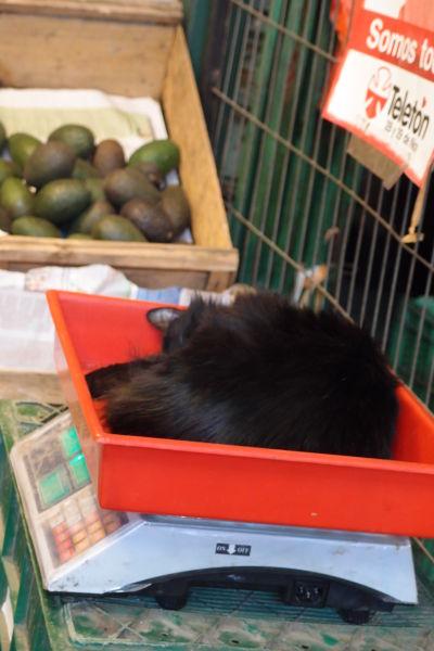 La Vega - najväčšia mestská tržnica v Santiagu de Chile - predavajú tu aj mačky na váhu
