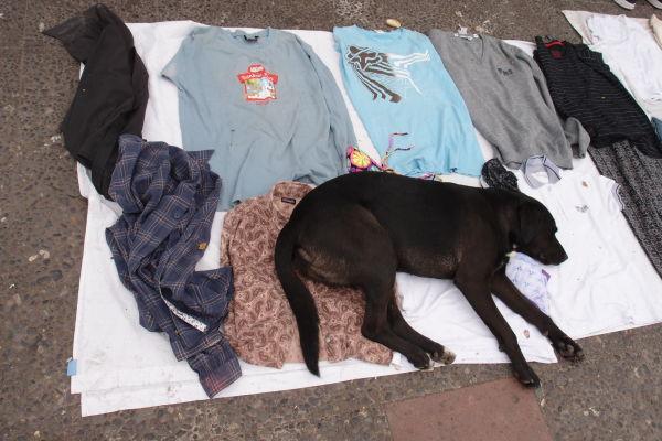 V okolí La Vegy predávajú aj pouliční predajcovia - chcete tričko alebo psa?