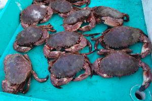 Rybí trh Caleta Portales vo Valparaíse - Kraby
