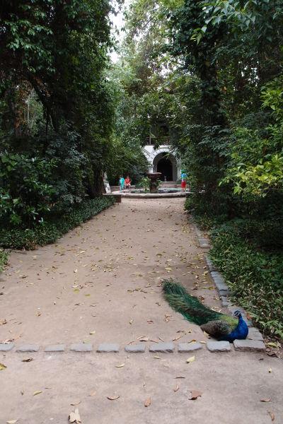Nádvorie (ambit) Chrámu sv. Františka v Santiagu je obývaný rôznou hydinou