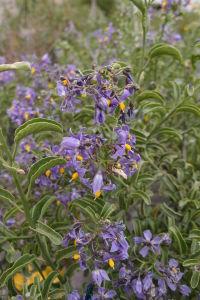 Vysokohorská andská flóra