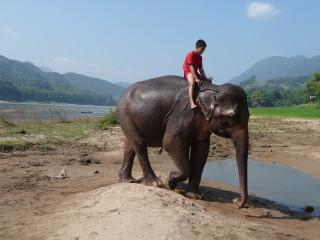 Cvičiteľ slonov na sútoku riek Nam Ou a Mekong
