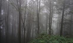 Ališanský les na Tchaj-wane