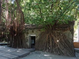 Stromový dom v Tchaj-nane
